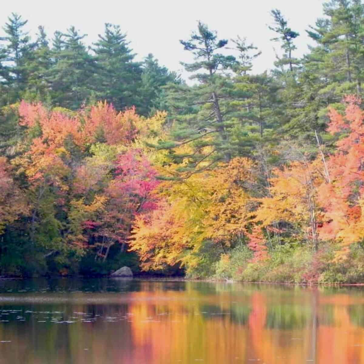 Autumn New England trees reflected in a pond.